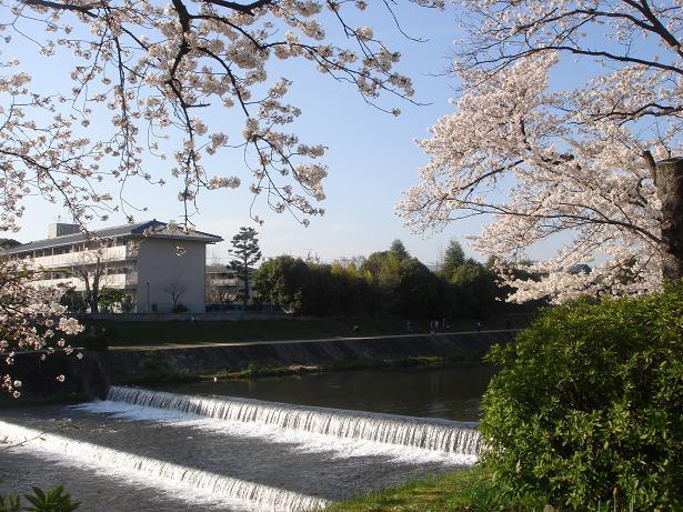sakura2010-1.jpg